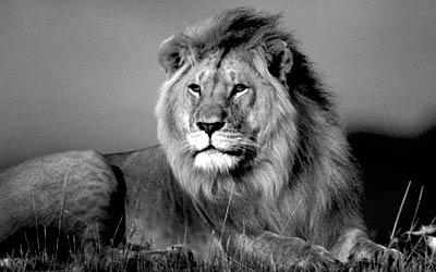 lion_buff_pkg_main
