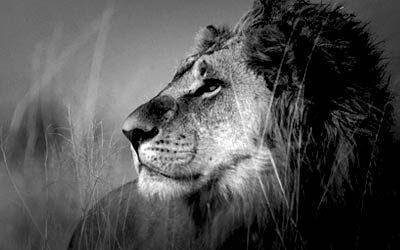 lion_double-buff_pkg_main